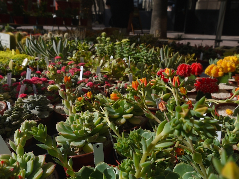 7 Cactus and Succulents for Sale at Downtown Anaheim's Farmers' Market